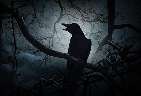 Кошмарные птицы