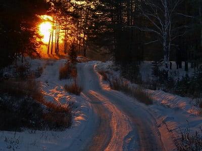 Фея сибирского леса