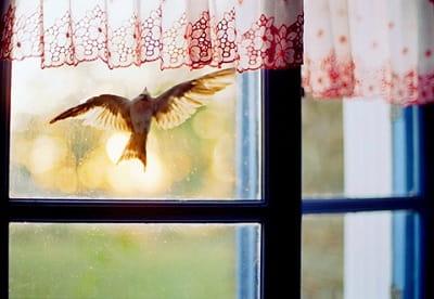 Когда птица стучит в окно