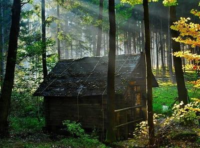 Лесной дед