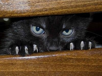 Кошка vs Дух