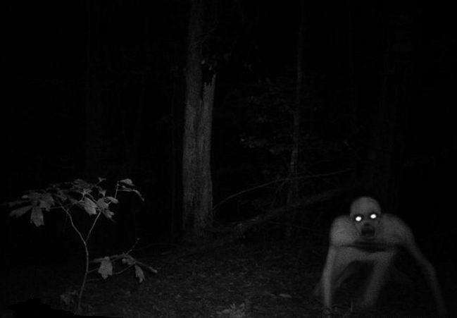 Нечто в лесу