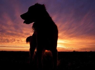 Собака из тьмы