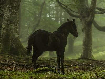 Встреча с лешим на конной прогулке