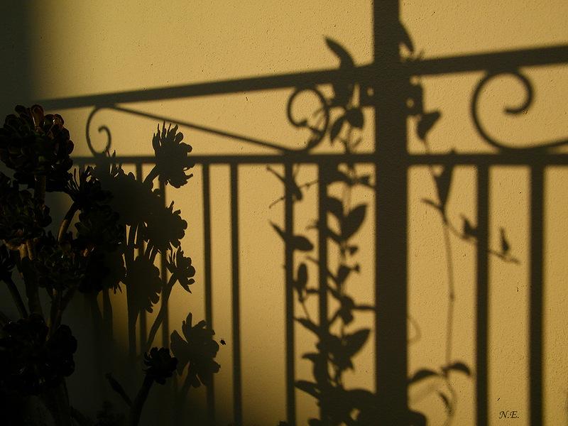 Неведомая тень
