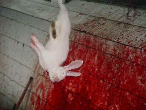 rabbit-meat