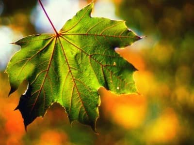 Дружелюбные листья