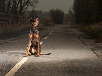 Удивительный пес