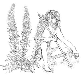 Молитва при сборе лечебных трав Магия  картинка
