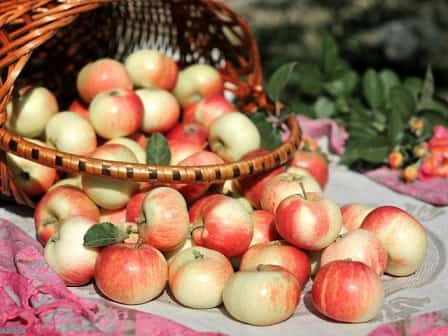 Яблочный спас (Преображение Господне)