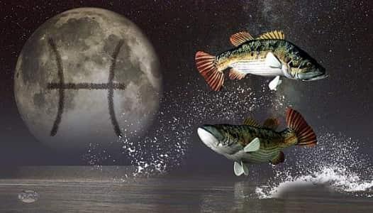 Совместимость Рыбы с другими знаками зодиака