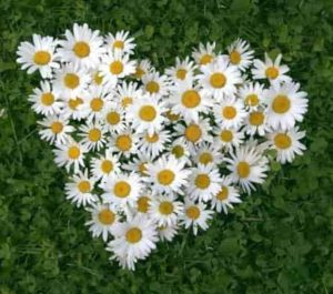 День семьи, любви и верности (День Петра и Февронии) Приметы  картинка