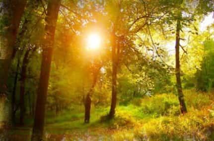 Бабье лето — приметы и традиции