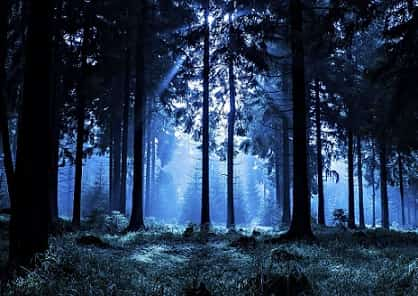 Лес. Ночь. Ужасы