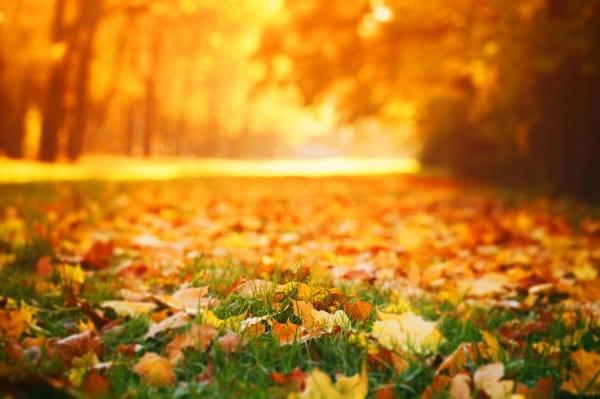 Народные приметы на Октябрь Приметы  картинка