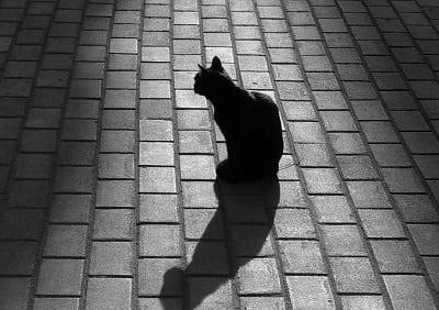 Черный кот в мешке