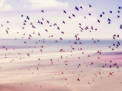 Птицы несущие беду