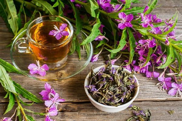 Иван чай полезные свойства и противопоказания Приметы  картинка