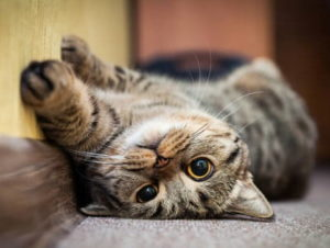 Способности кошек: умственные, удивительные и необычные