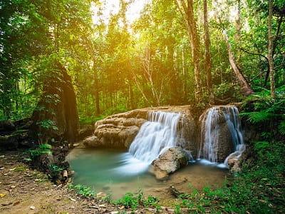 Джунгли или лес во сне