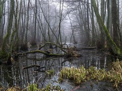 Видеть болото во сне