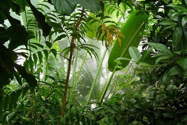 Джунгли или лес во сне Сонник  картинка