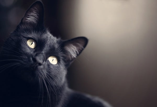 Способности кошек: умственные, удивительные и необычные Легенды  картинка