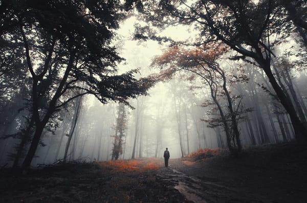 Поиск дороги домой во сне Сонник  картинка