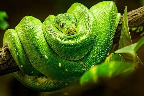Змеи во сне Сонник  картинка