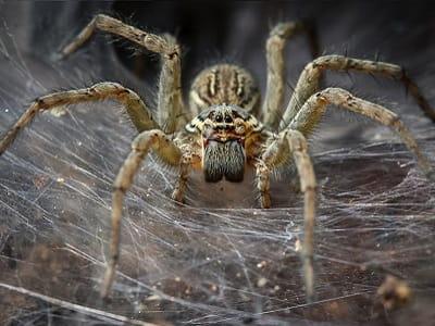 К чему снится паук во сне