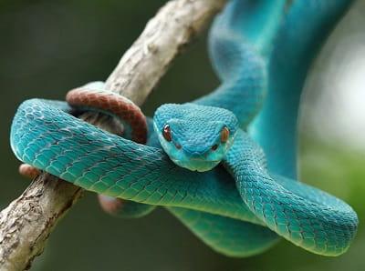 Змеи во сне