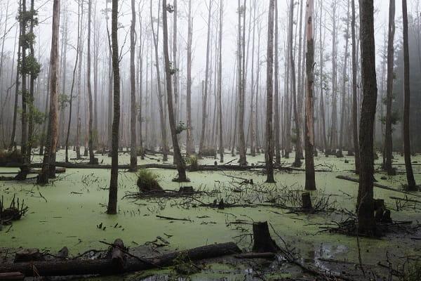 Видеть болото во сне Сонник  картинка