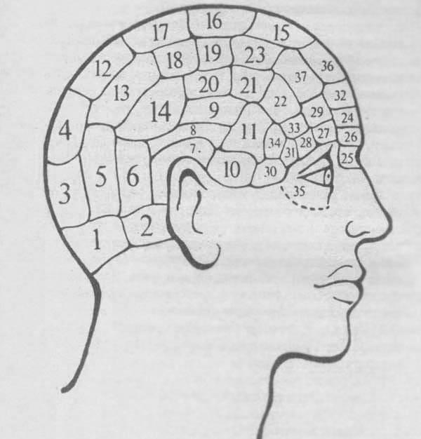 Френология: гадание по форме головы Гадания  картинка