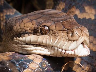 Охота на змею