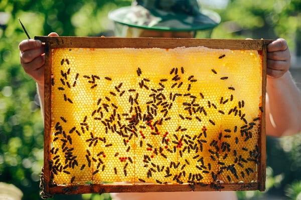 Зосим Соловецкий (Зосима-пчельник) Приметы  картинка