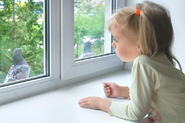 Если птица стучится в окно Приметы  картинка