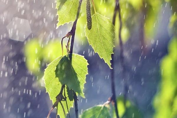Мокей Мокрый Приметы  картинка