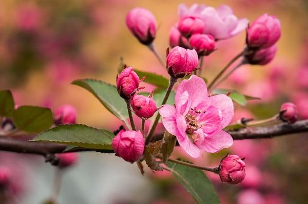 Евтихий Тихий да Ерема Пролетный Приметы  картинка