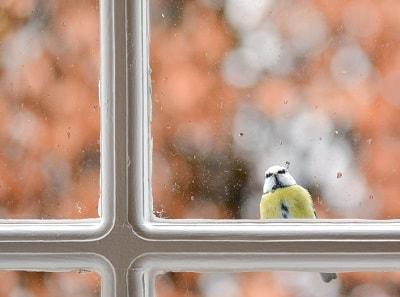Если птица стучится в окно