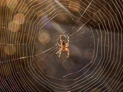 Приметы про пауков