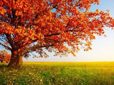 Приметы про деревья