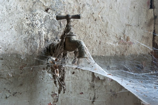 Приметы про пауков Приметы  картинка