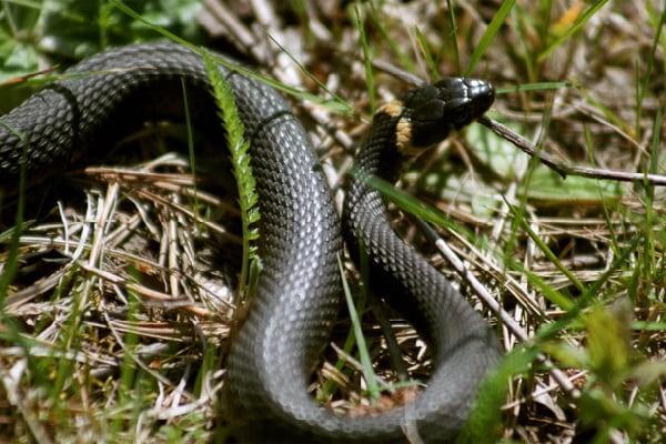 Змеиный праздник Приметы  картинка