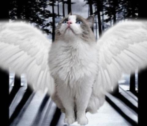 Кот-хранитель