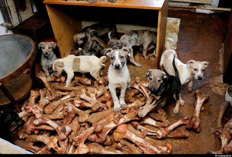 boooh.ru, много собак в квартире
